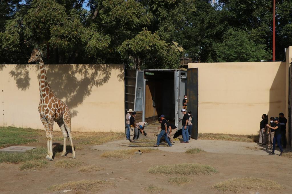 CPB-021-2020.-Tendrá zoológico Tamatán nuevo integrante (1)